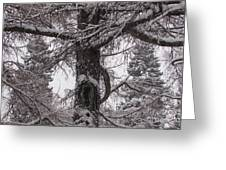 Trees Under Snow Greeting Card