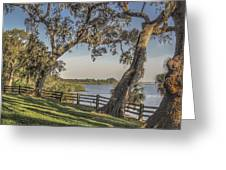 Trees With A View Greeting Card