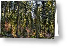 Trees With Moss In The Forest Greeting Card