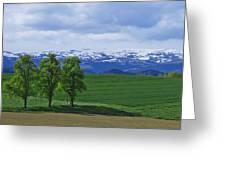 Trees With Mountains Greeting Card