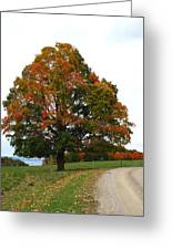 Tri-color Tree Greeting Card