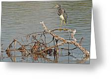 Tri-colored Heron On The Water Greeting Card