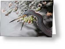 Tri Colored Heron Profile Greeting Card
