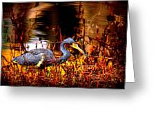 Tri Colored Heron - Reflection Greeting Card