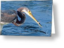 Tri Fish Splash Greeting Card