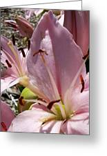 Tri Pink Lily Greeting Card
