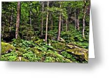 Triberg Forest Greeting Card