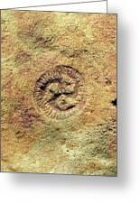 Tribrachidium Fossil Greeting Card