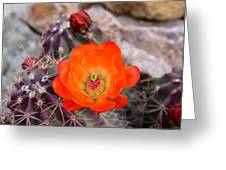 Trichocereus Cactus Flower  Greeting Card