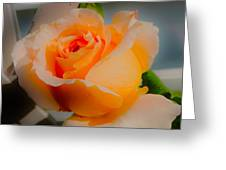 Tricia's Rose 8.6.14  Greeting Card