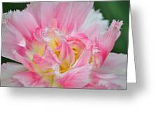 Tricolor Close-up Greeting Card