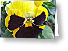 Tricolor Pansy Greeting Card