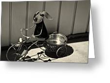 Tricycle Dog Greeting Card