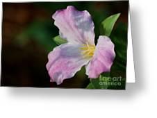 Trillium Blush Greeting Card