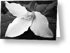 Trillium Flower In Black And White Greeting Card