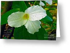 Trillium In The Forest Greeting Card