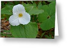 Trillium Near The River Greeting Card