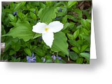 Trillium - White Beauty Greeting Card