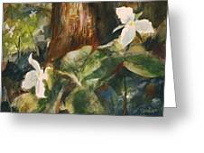 Trillium Woods 3 Greeting Card