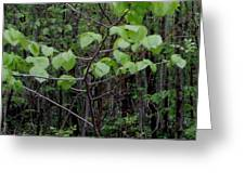 Trilliums Grow Deep Inside Forest Greeting Card