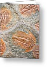 Trilobites Greeting Card