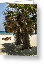 Trincomalee Palms Greeting Card