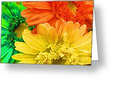 Trio Of Bright Colored Daisies Greeting Card