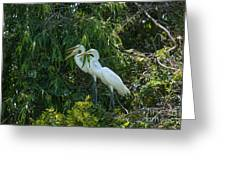 Trio Of Egret Love Greeting Card