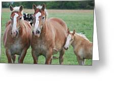 Trio Of Horses 2 Greeting Card