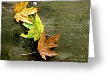 Trio Of Leaves Greeting Card
