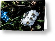 Trio Of Orchids Greeting Card by Shawn Lyte