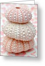 Trio Of Pink Sea Urchins Greeting Card