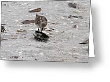 Trio Of Shore Birds Greeting Card