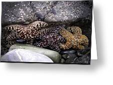 Trio Of Starfish Greeting Card