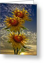 Trio Of Sunflowers Greeting Card