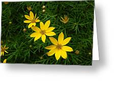 Trio Of Yellow Flower Blossoms Greeting Card