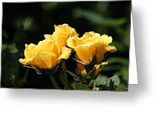Trio Of Yellow Roses Greeting Card