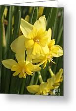 Tripartite Daffodil Greeting Card