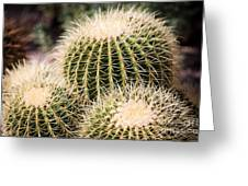 Triple Cactus Greeting Card