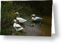 Triple Ducks Greeting Card