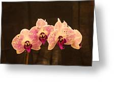 Triple Orchid Arrangement 1 Greeting Card