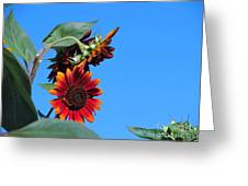 Triple Red Sunflowers Greeting Card