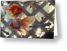 Triple Tail Goldfish Greeting Card