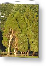 Triple Trees Greeting Card by Debbie Nester