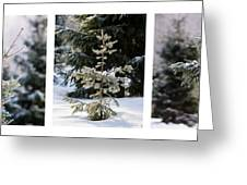 Triptych - Christmas Trees In The Forest - Featured 3 Greeting Card