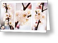 Triptych Light Of Spring 2 Greeting Card