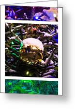 Triptych - Traffic Lights Christmas - Featured 2 Greeting Card