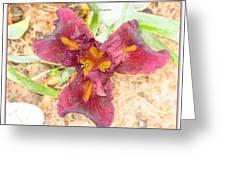 Tristar Iris Greeting Card