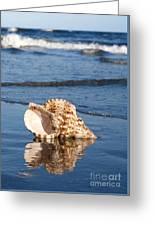Triton Seashell Greeting Card