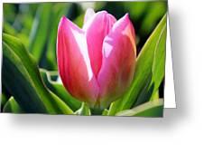 Triumph Tulip Greeting Card